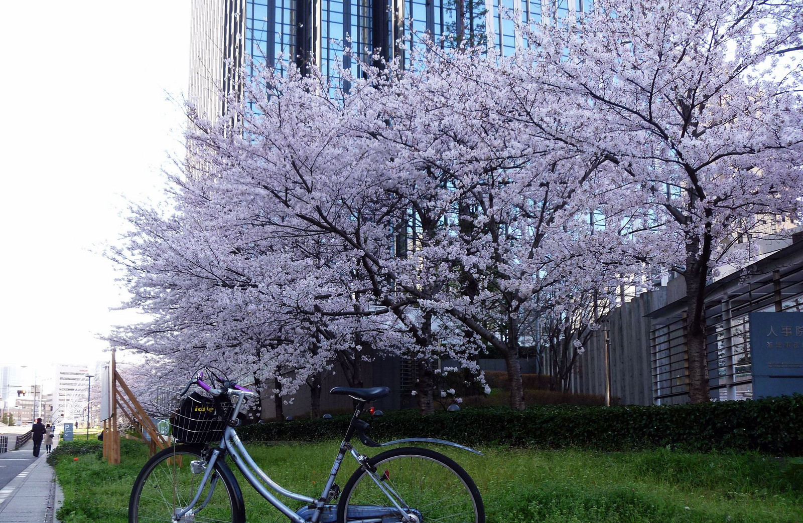 Sakura2015